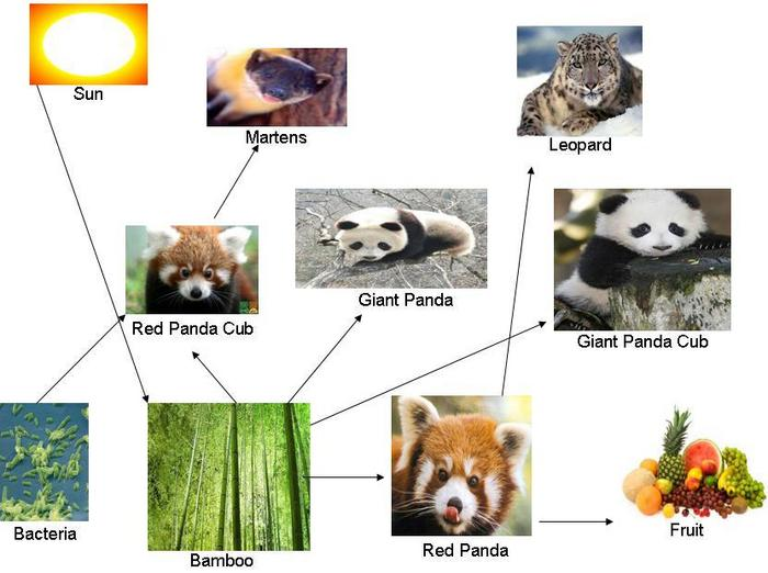 Red Panda Food And Diet